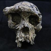 Sahelanthropus Tschadensis