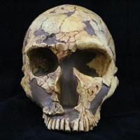 Homo Neanderthalensis (LaFerrassie)