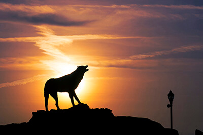 A statue of a wolf with the sunset in the background